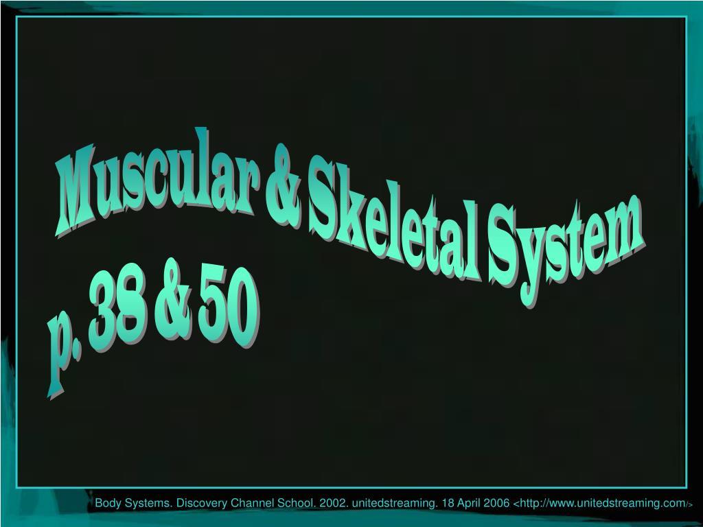 Muscular & Skeletal System