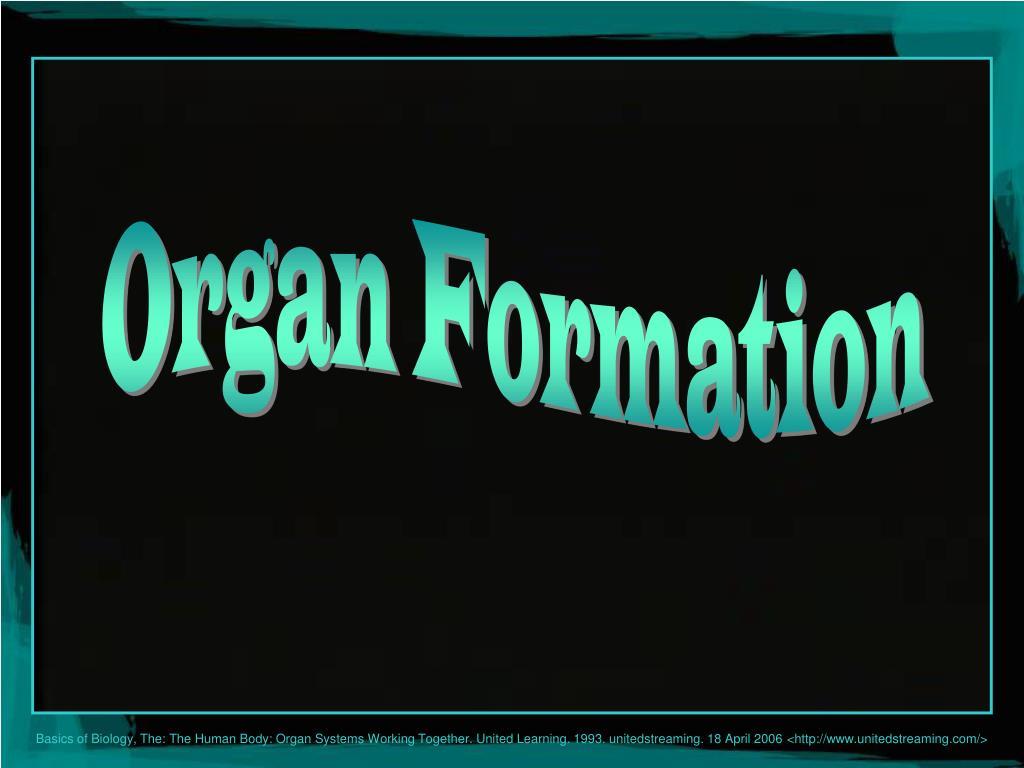 Organ Formation