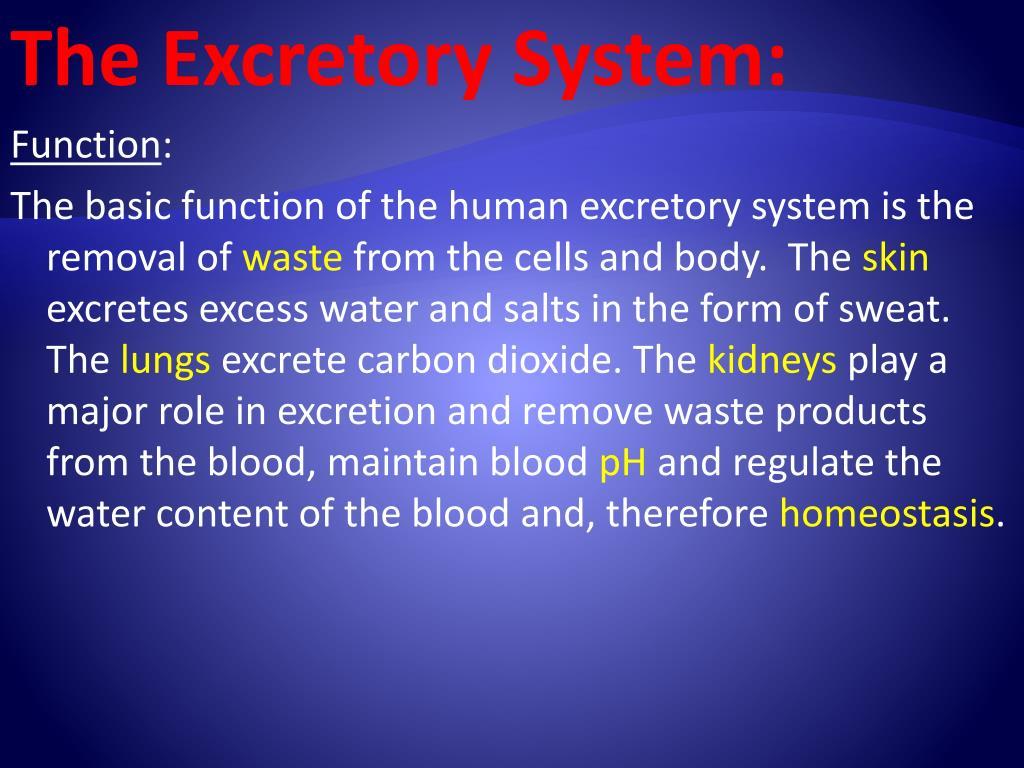 The Excretory System: