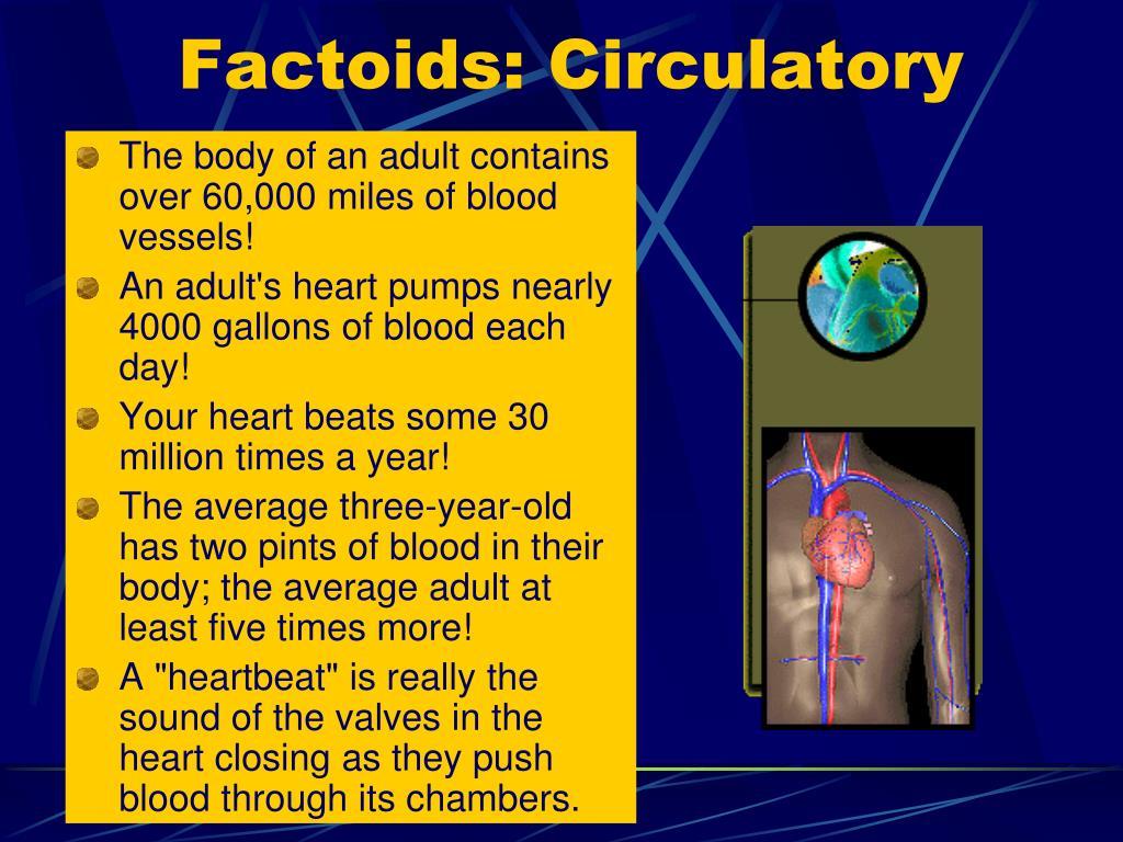 Factoids: Circulatory