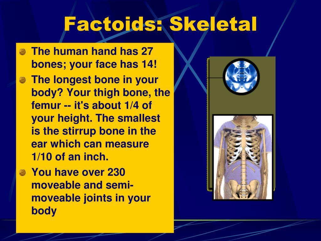 Factoids: Skeletal