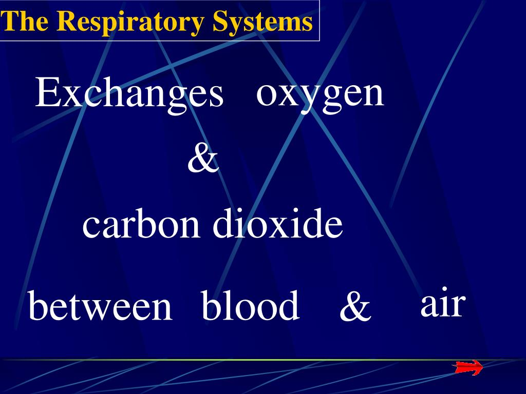 The Respiratory Systems