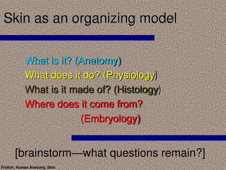 Skin as an organizing model2