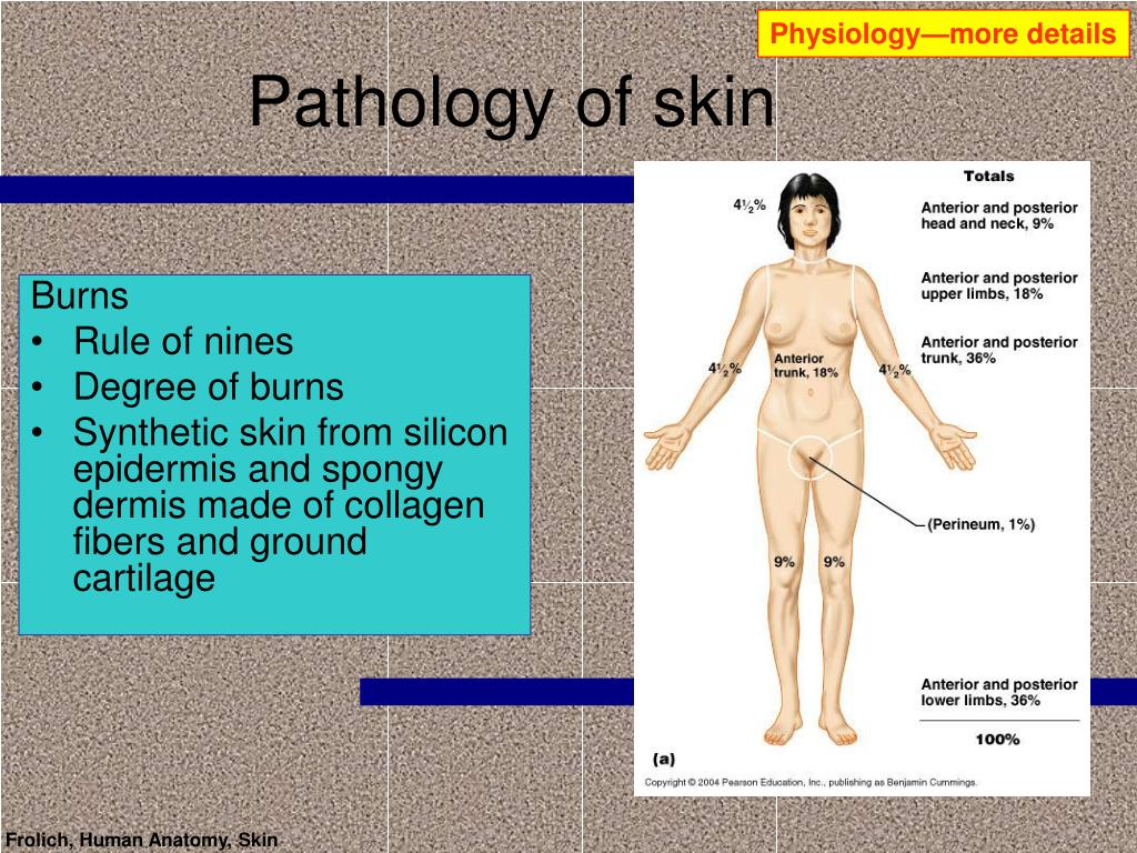 Physiology—more details