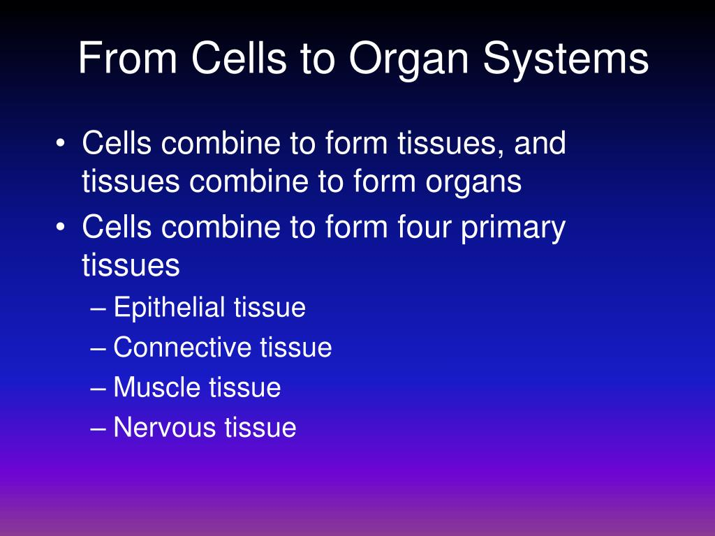From Cells to Organ Systems