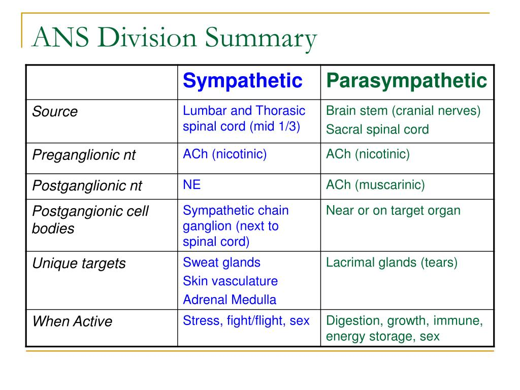 ANS Division Summary