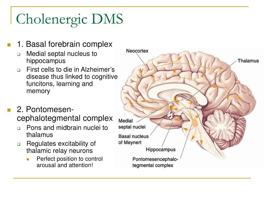 Cholenergic DMS