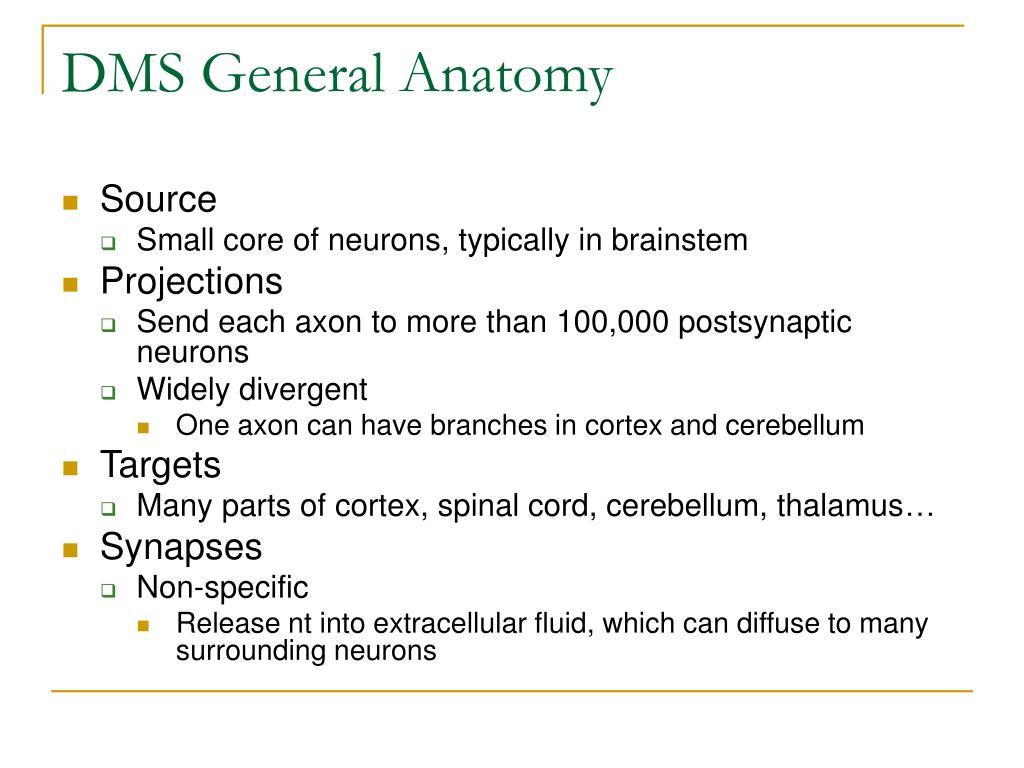 DMS General Anatomy