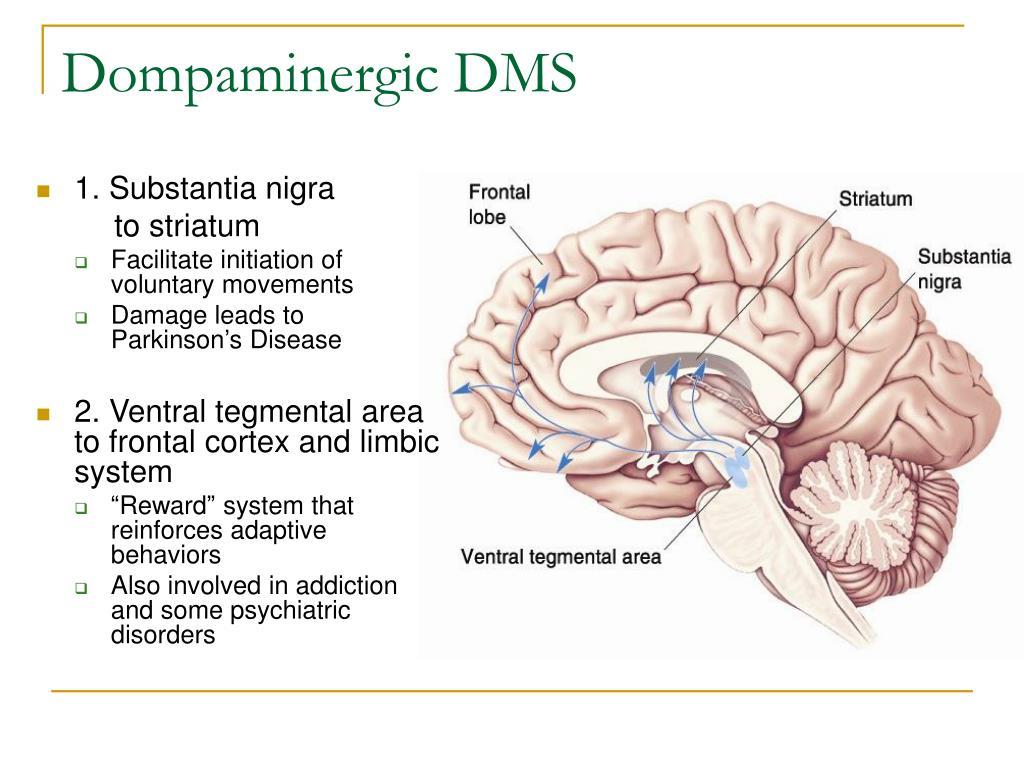Dompaminergic DMS
