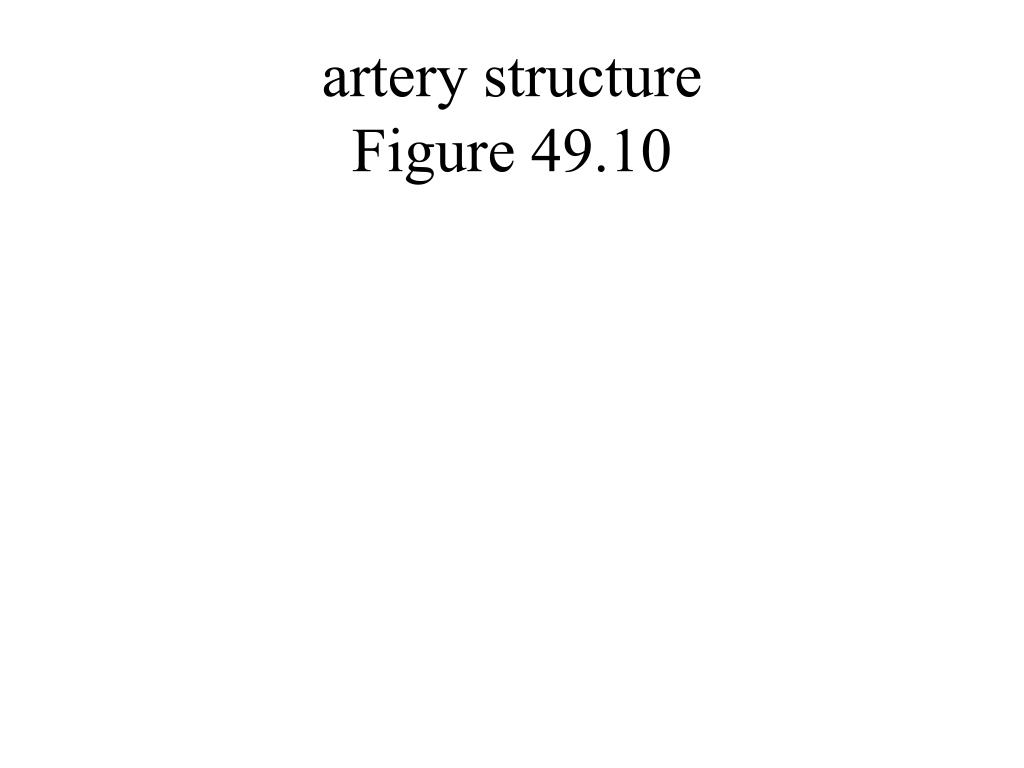 artery structure