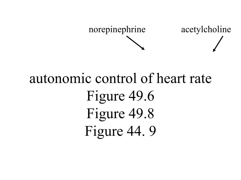 autonomic control of heart rate