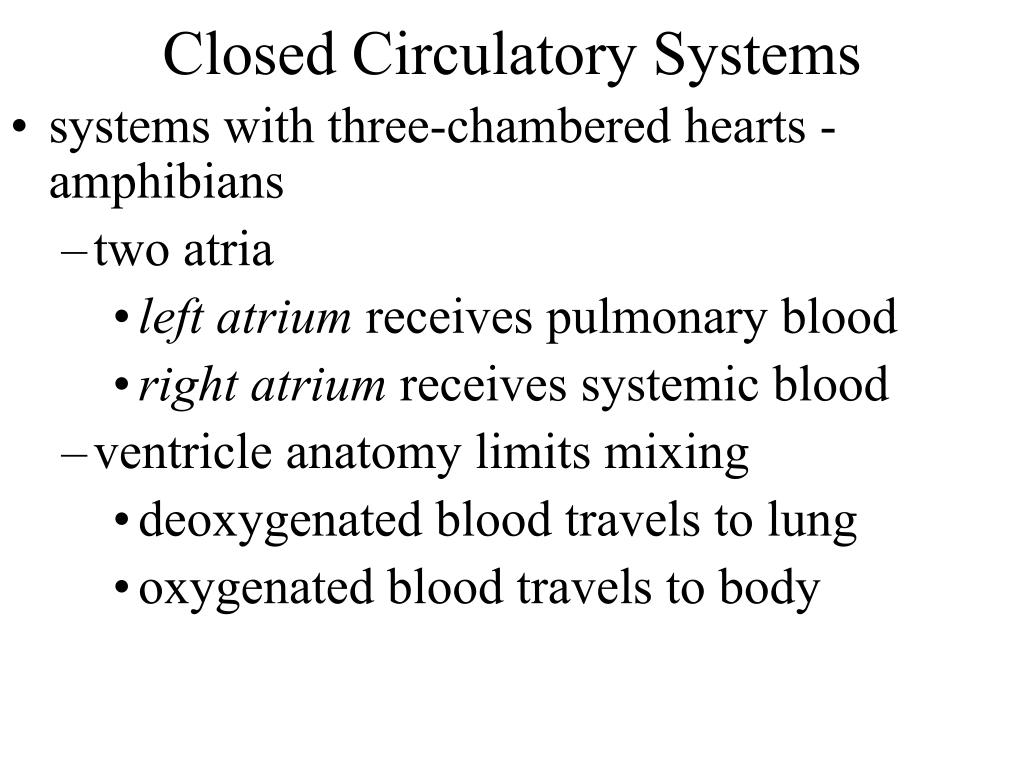 Closed Circulatory Systems