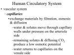 human circulatory system37