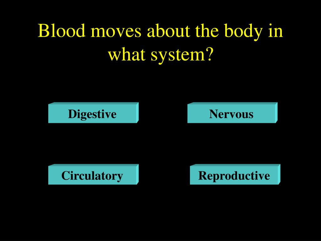 Blood moves about the body in what system?