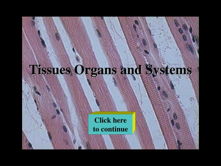 Tissues organs and systems