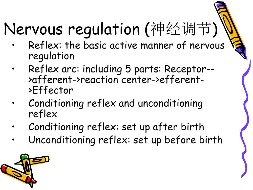 Nervous regulation (