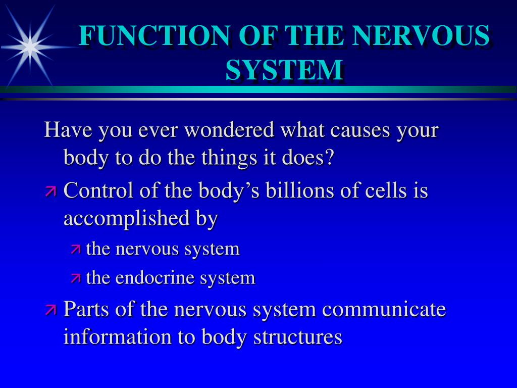 FUNCTION OF THE NERVOUS SYSTEM