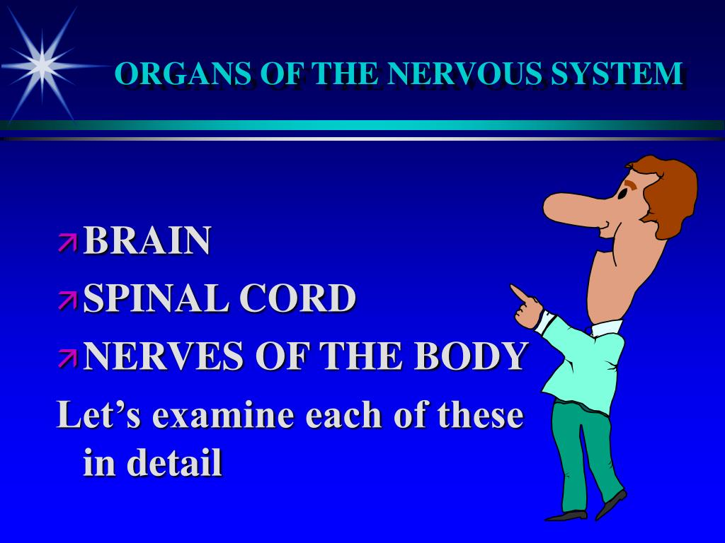 ORGANS OF THE NERVOUS SYSTEM