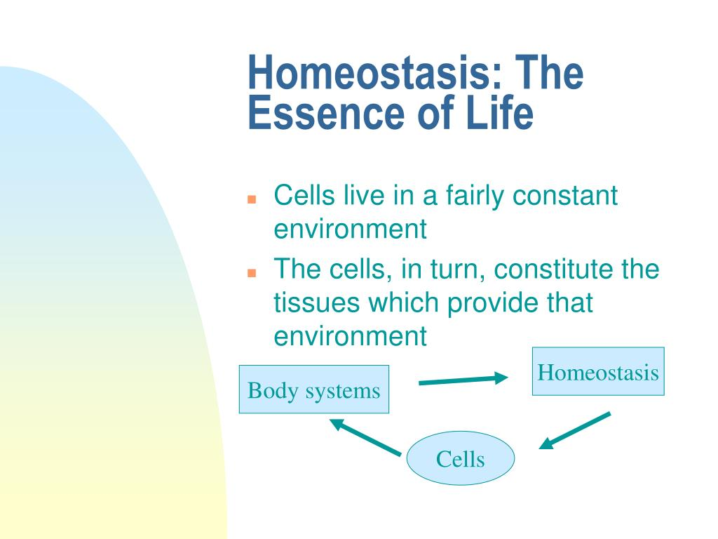 Homeostasis: The Essence of Life