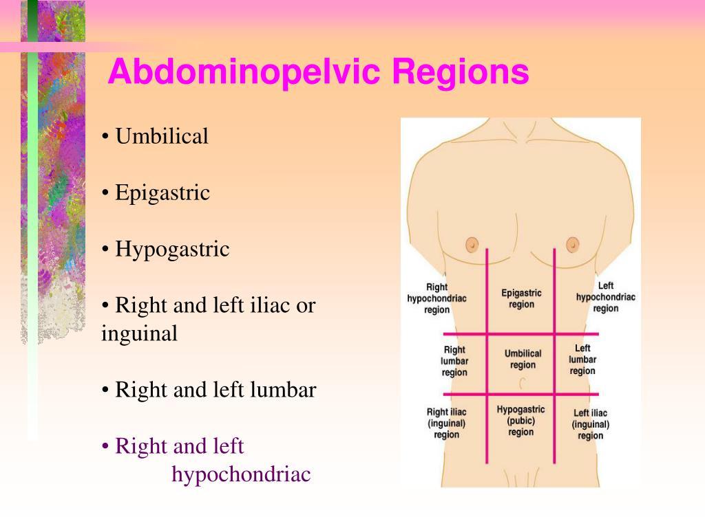 Abdominopelvic Regions