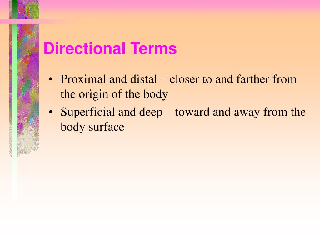 Directional Terms
