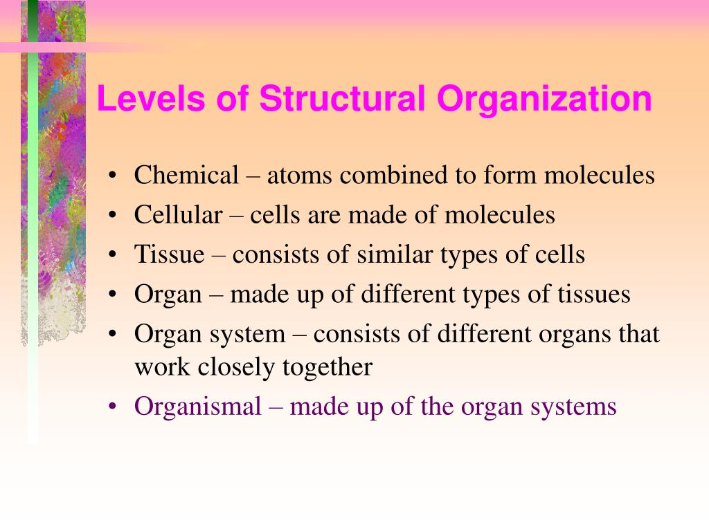Levels of Structural Organization