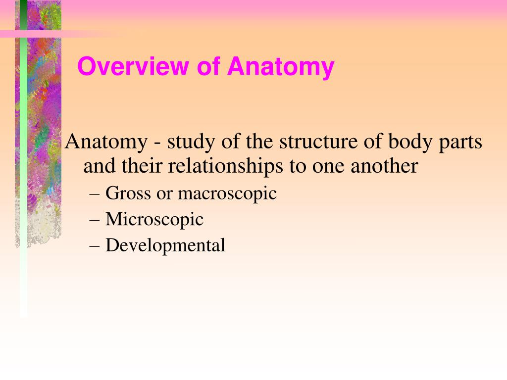 Overview of Anatomy