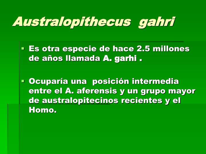 Australopithecus  gahri