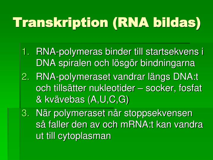 Transkription (RNA bildas)