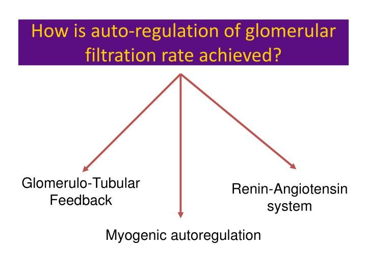 Glomerulo-Tubular Feedback