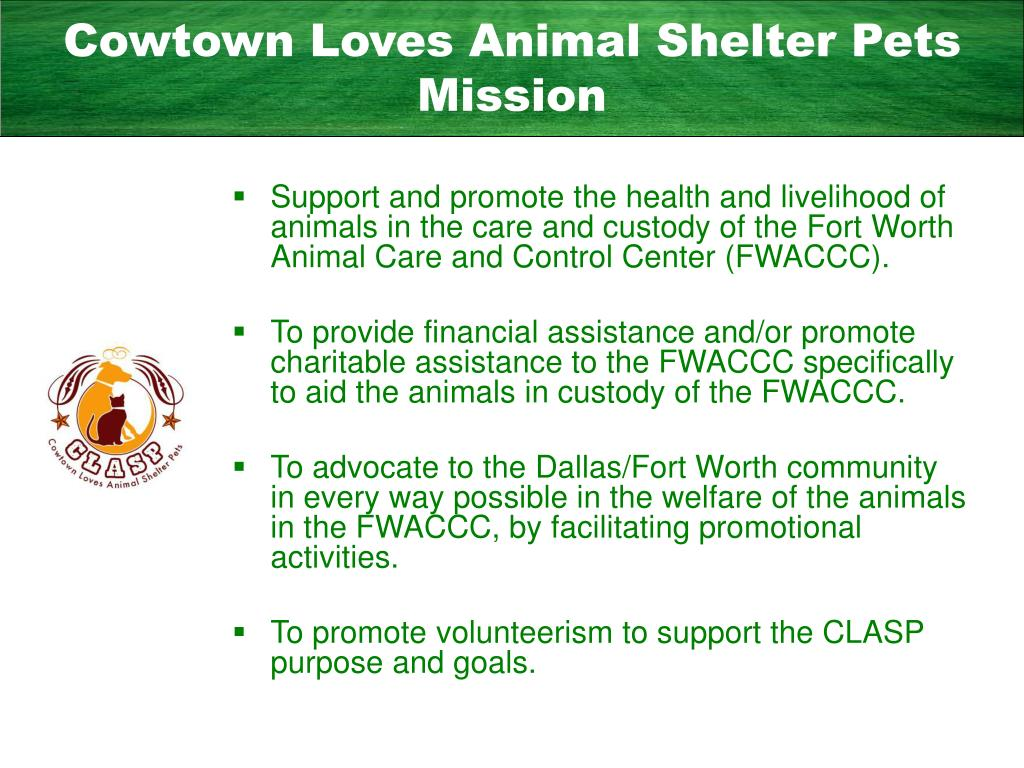 Cowtown Loves Animal Shelter Pets