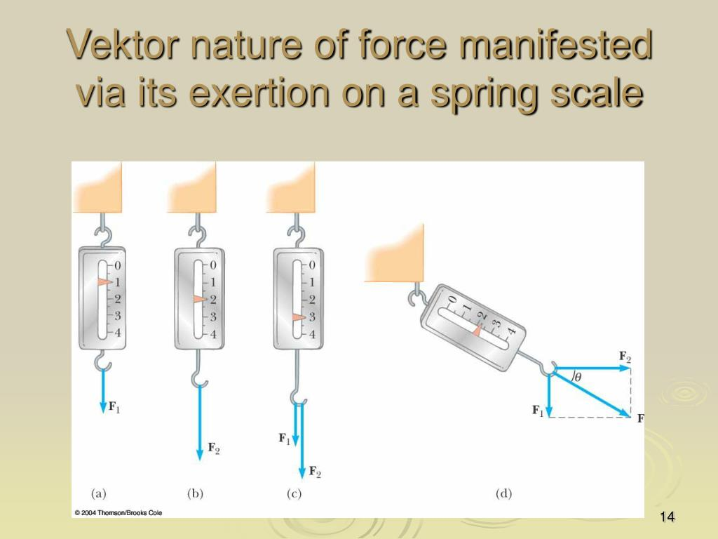 Vektor nature of force manifested via its exertion on a spring scale
