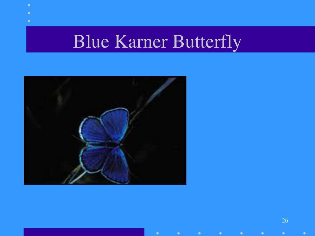 Blue Karner Butterfly