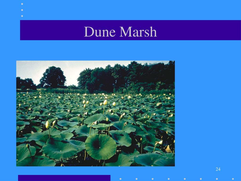 Dune Marsh