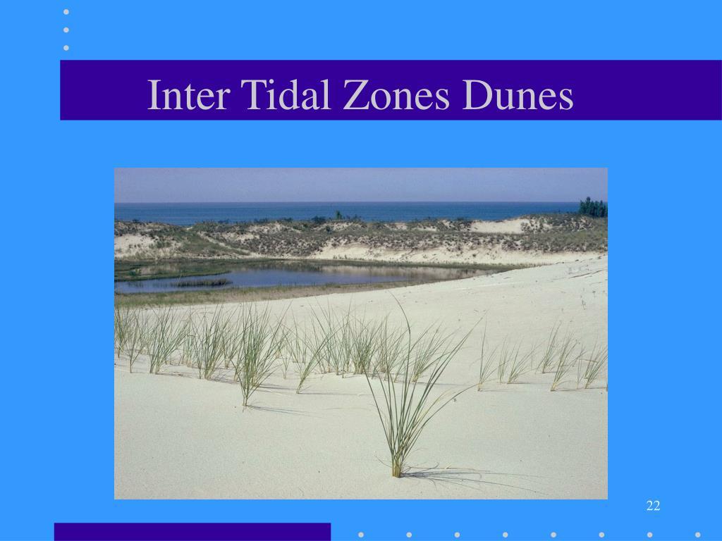 Inter Tidal Zones Dunes