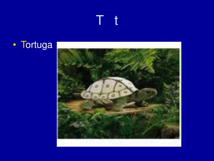 T   t