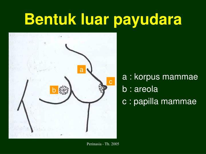 Bentuk luar payudara