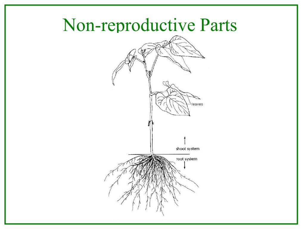 Non-reproductive Parts