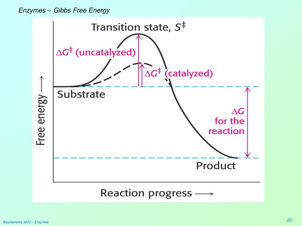 Enzymes – Gibbs Free Energy