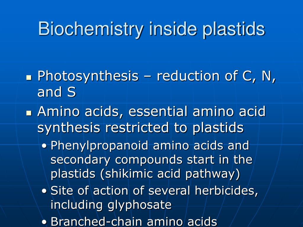 Biochemistry inside plastids