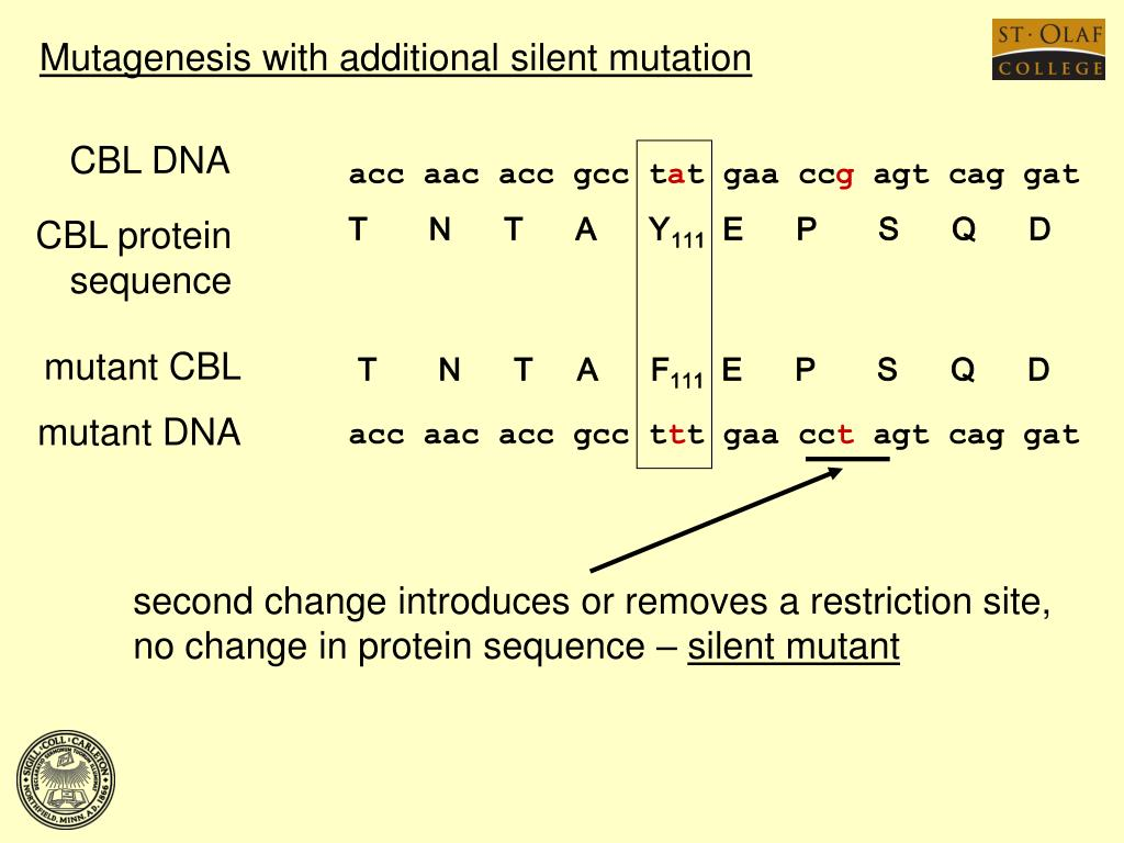Mutagenesis with additional silent mutation