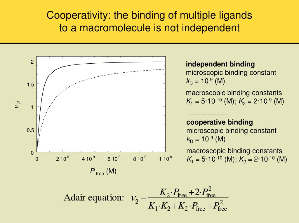 Cooperativity: the binding of multiple ligands