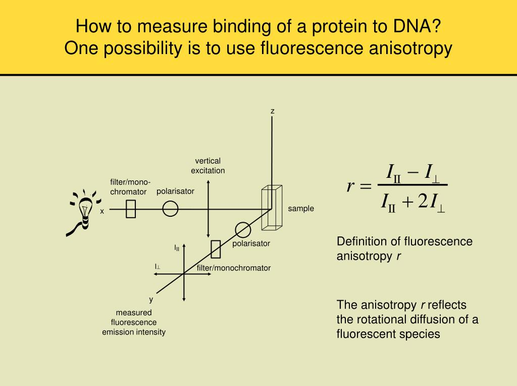 How to measure binding of a protein to DNA?