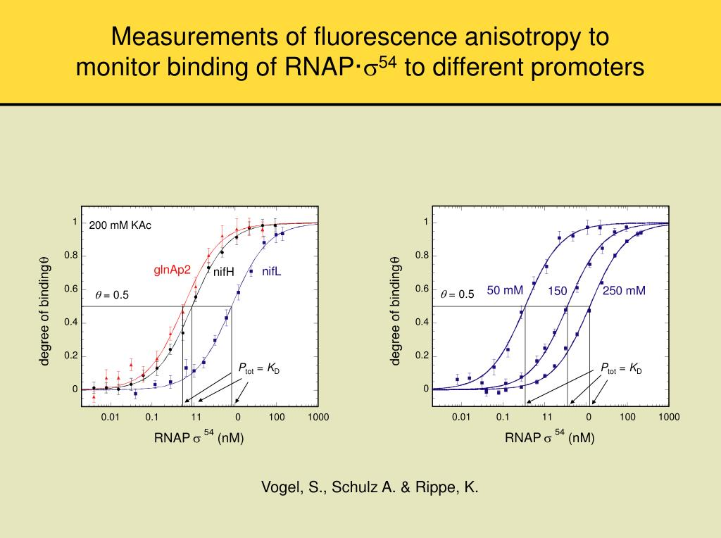 Measurements of fluorescence anisotropy to