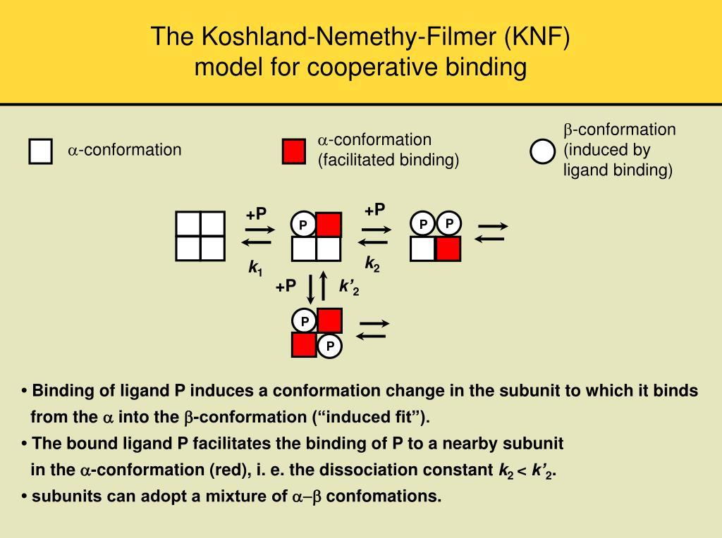 The Koshland-Nemethy-Filmer (KNF)
