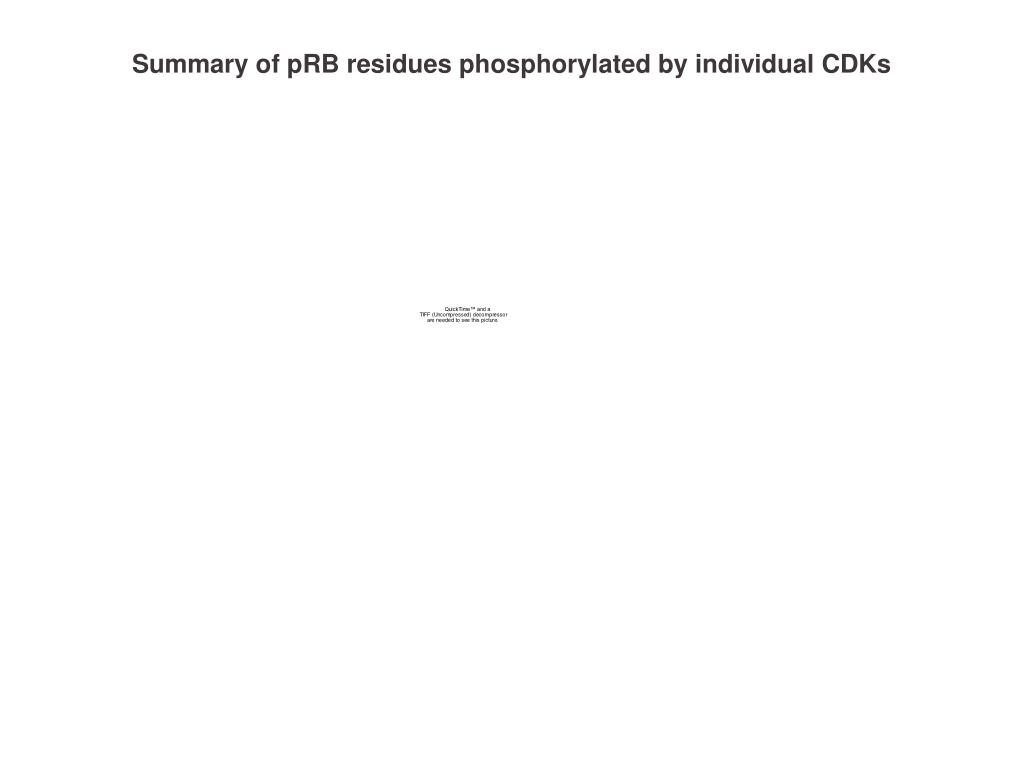 Summary of pRB residues phosphorylated by individual CDKs