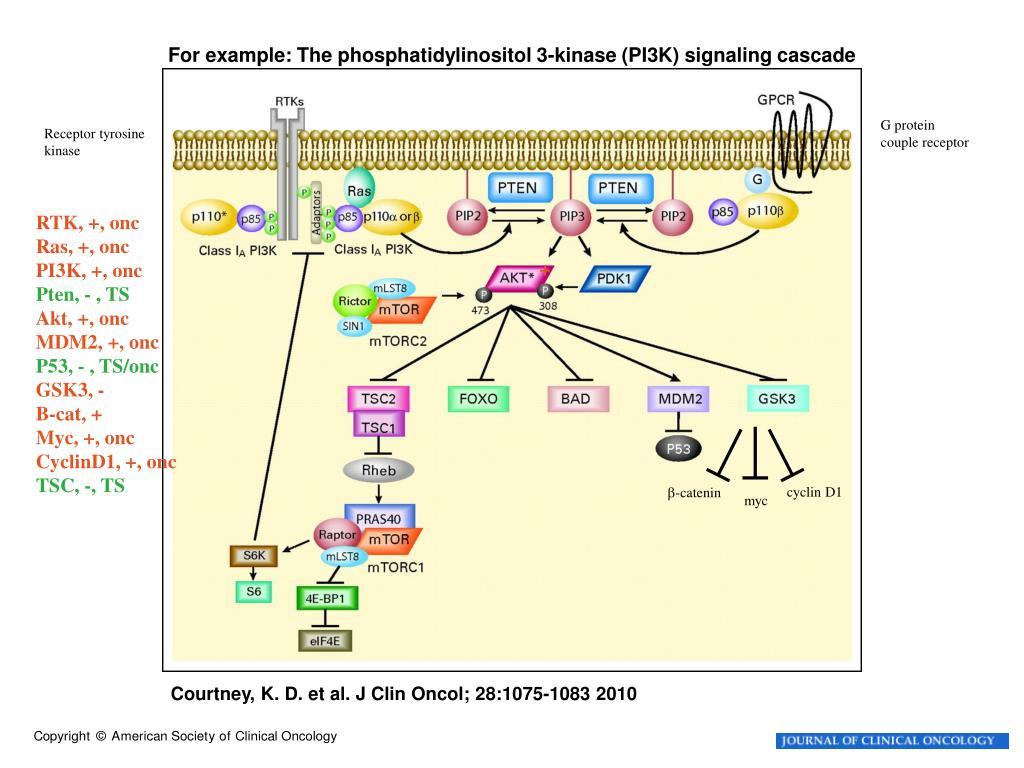 For example: The phosphatidylinositol 3-kinase (PI3K) signaling cascade