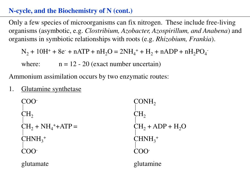 N-cycle, and the Biochemistry of N (cont.)