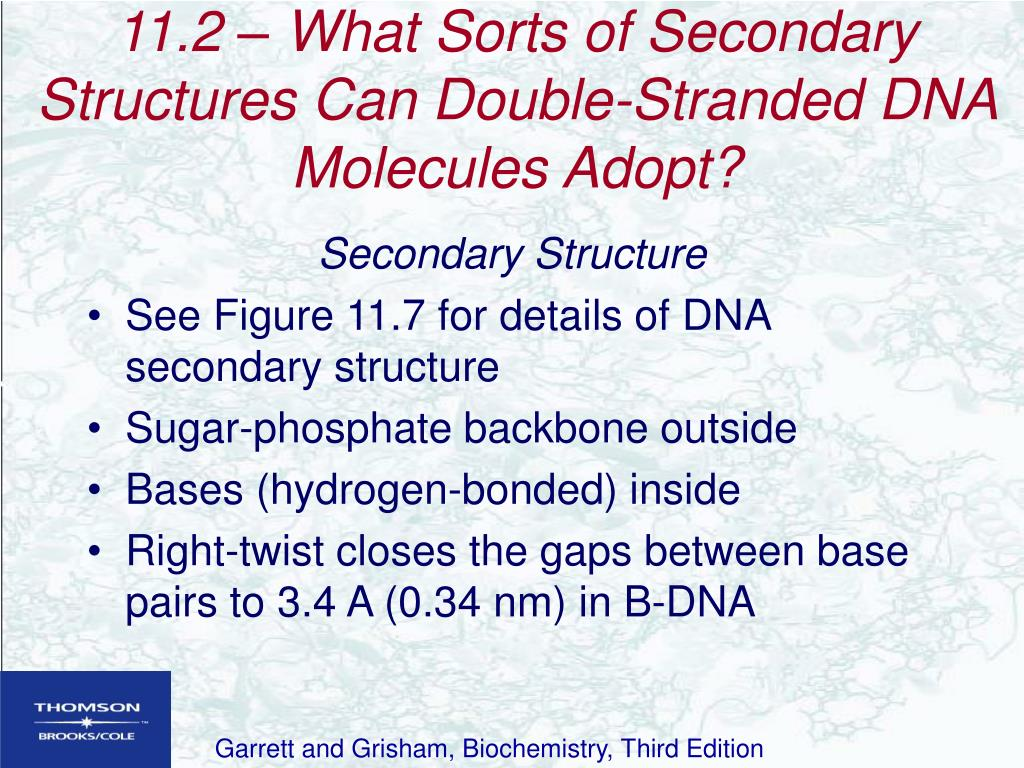 11.2 – What Sorts of Secondary Structures Can Double-Stranded DNA Molecules Adopt?