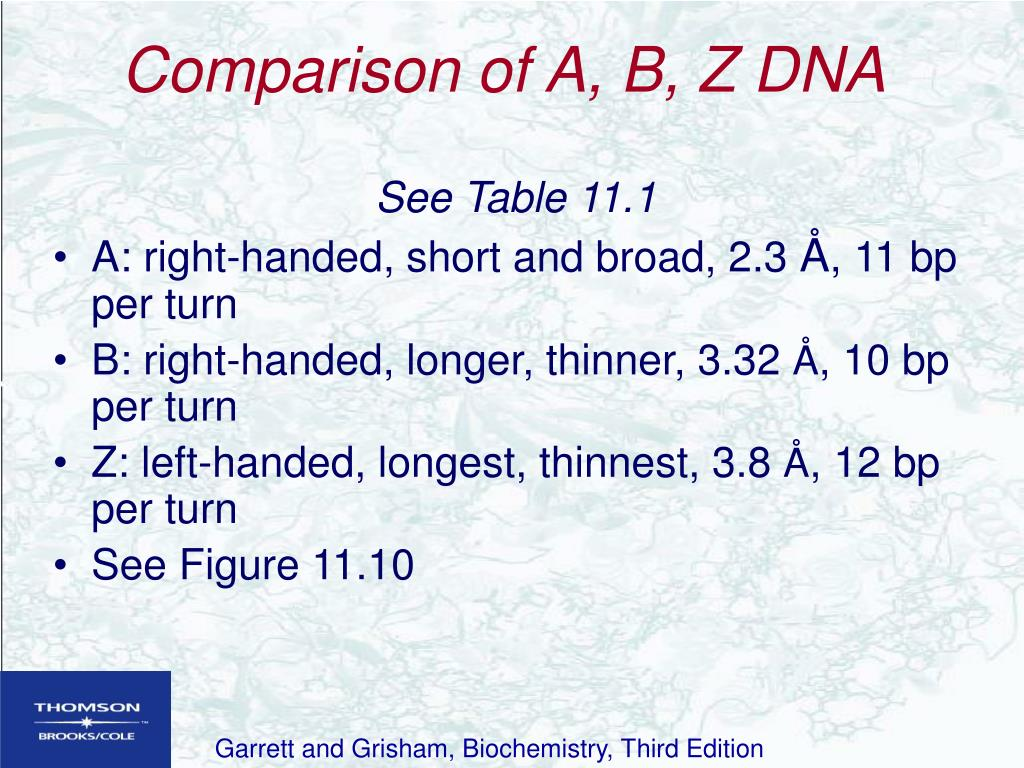 Comparison of A, B, Z DNA